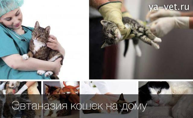 Сколько стоит усыпить кошку?