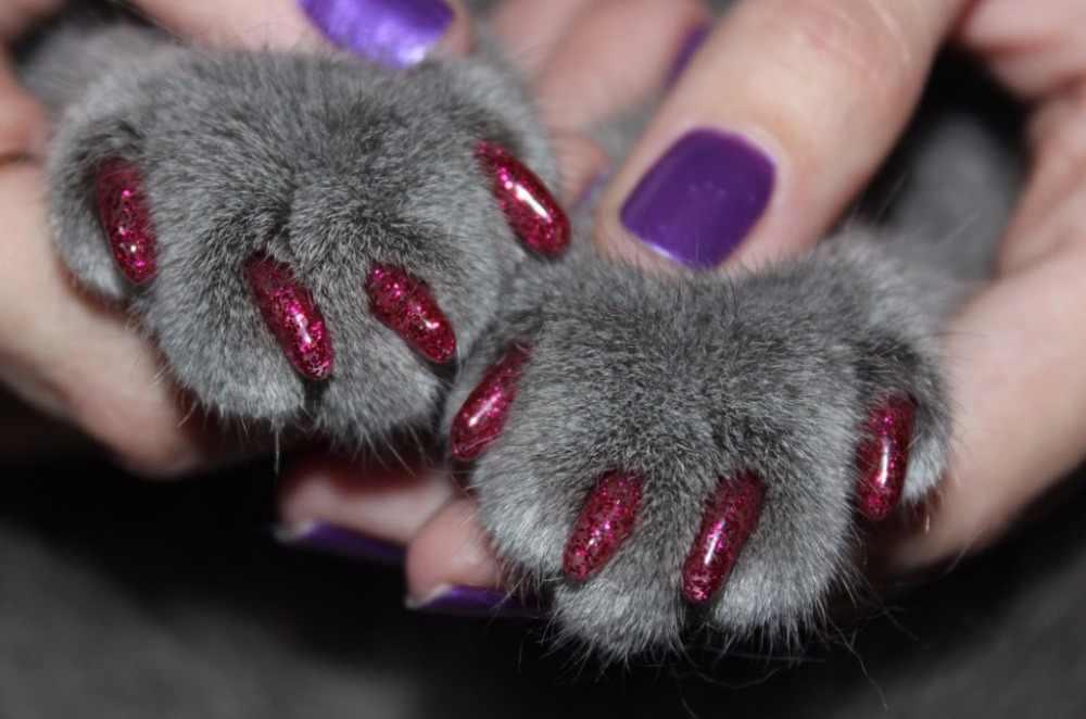 Как правильно выбрать и приклеить антицарапки кошке на ногти