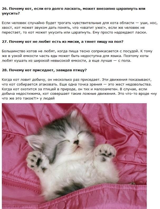 50  интересных фактов о кошках — общенет