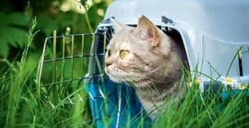 Коты и кошки зимой. при какой температуре кошки могут жить на улице: какие породы не переносят холода поведение кошек в зимний период