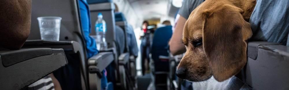 Как перевозить животных в самолетах ак «россия»