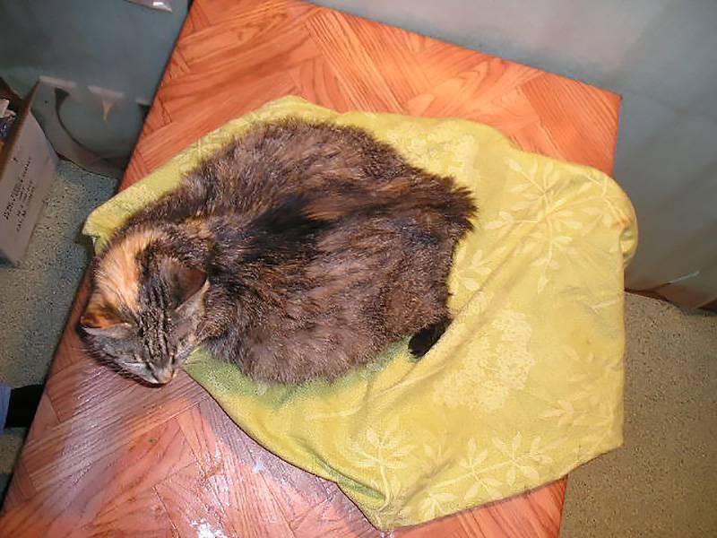 Как можно помочь старой кошке, если она ничего не ест, только пьет воду и спит?