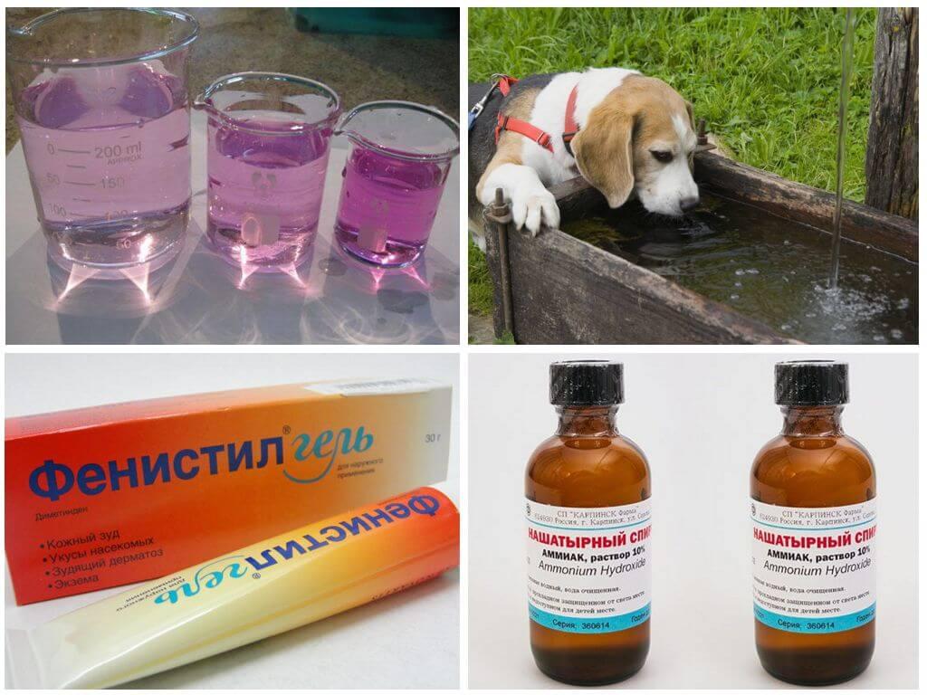 Антибиотики после укуса кошки