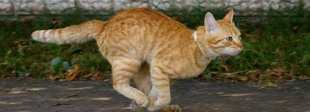 Всё о кошках и котах - всё о таких милых созданиях, как кошки