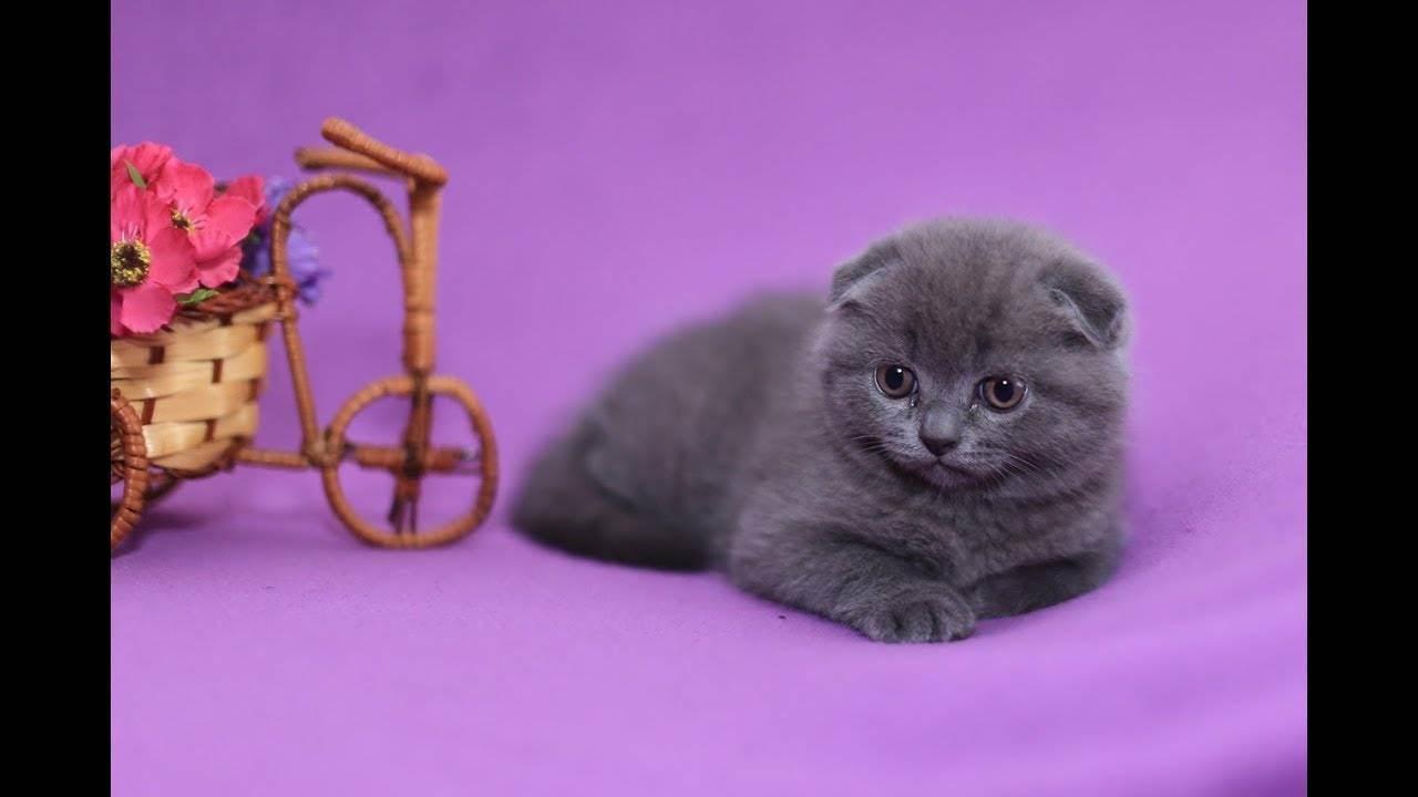 Проверенные способы, как быстро приучить котенка к лотку