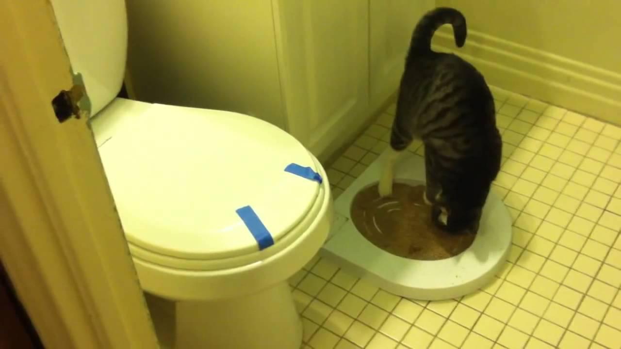 Сколько раз стерилизованная кошка должна ходить в туалет   my darling cats