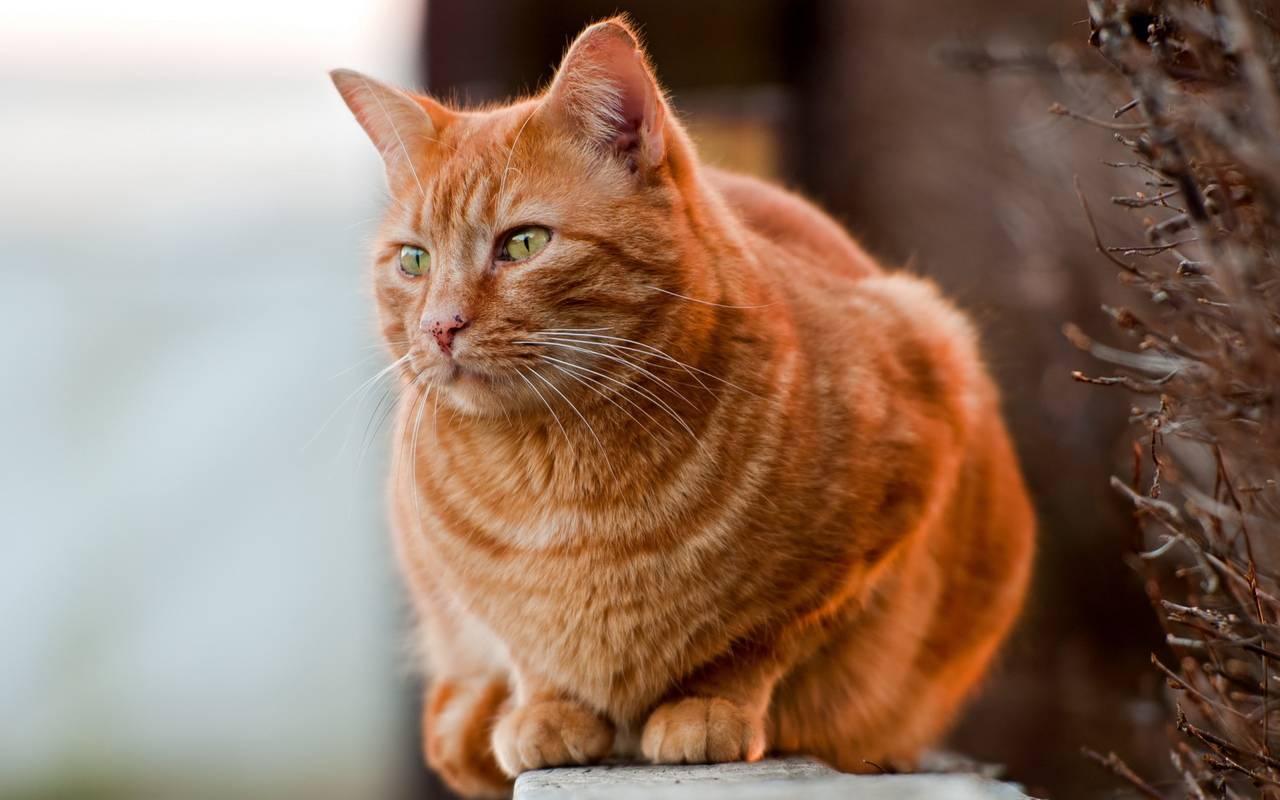 Серый или дымчатый кот: порода с зелеными глазами