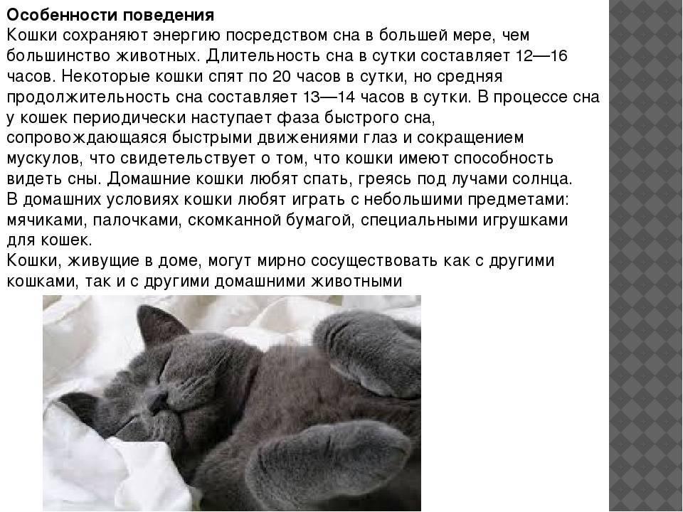 Виды и причины агрессии у кошек   сайт «мурло»