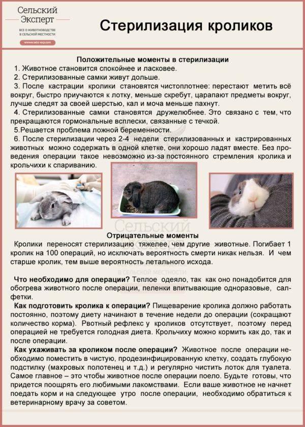 Как подготовить кошку к стерилизации: советы ветеринара. когда можно стерилизовать кошку - animallist.ru