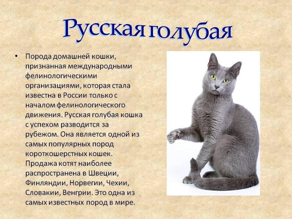10 самых необычных, удивительных, странных и интересных пород домашних кошек