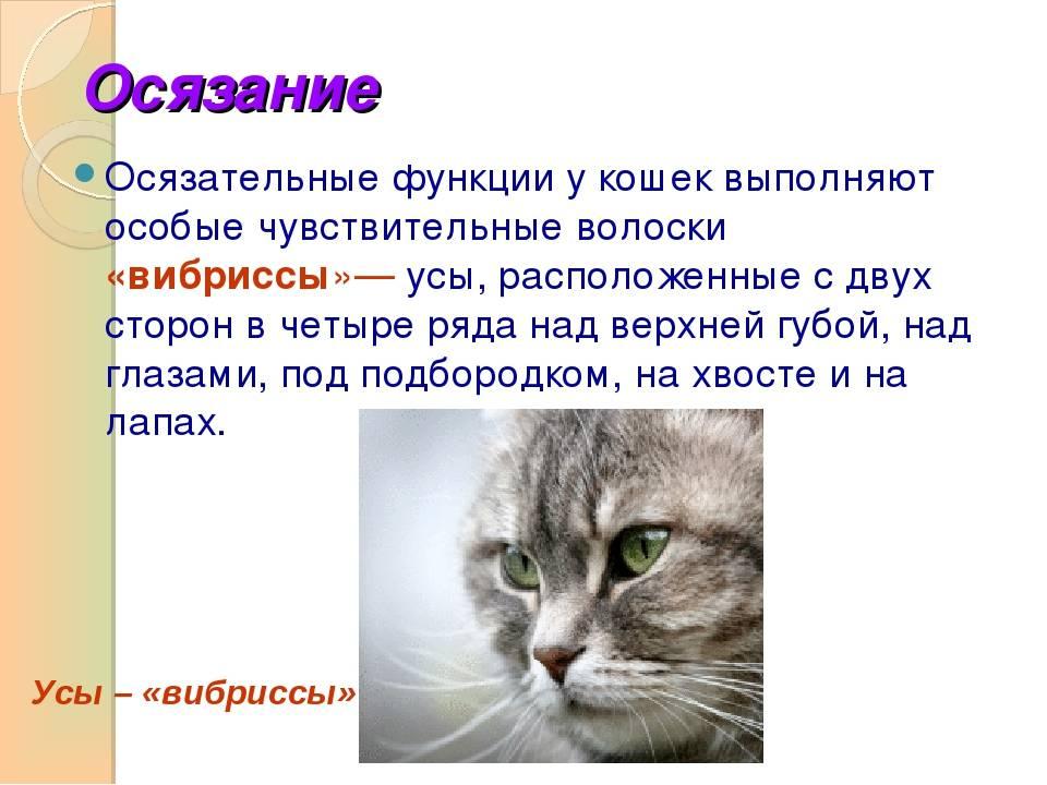 Память у кошек