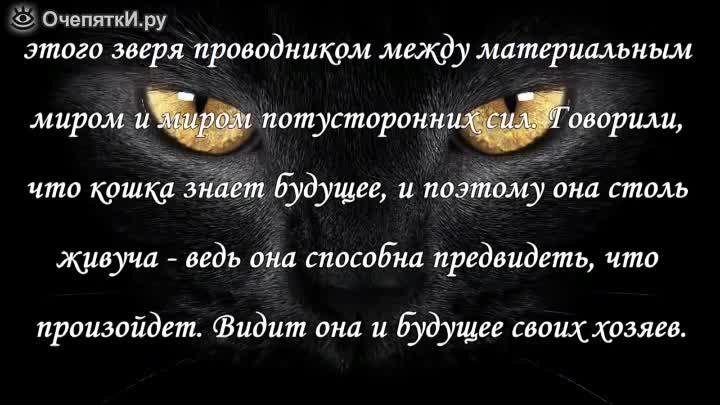 Почему нельзя смотреть кошке в глаза: красивая легенда и научное объяснение - kot-pes