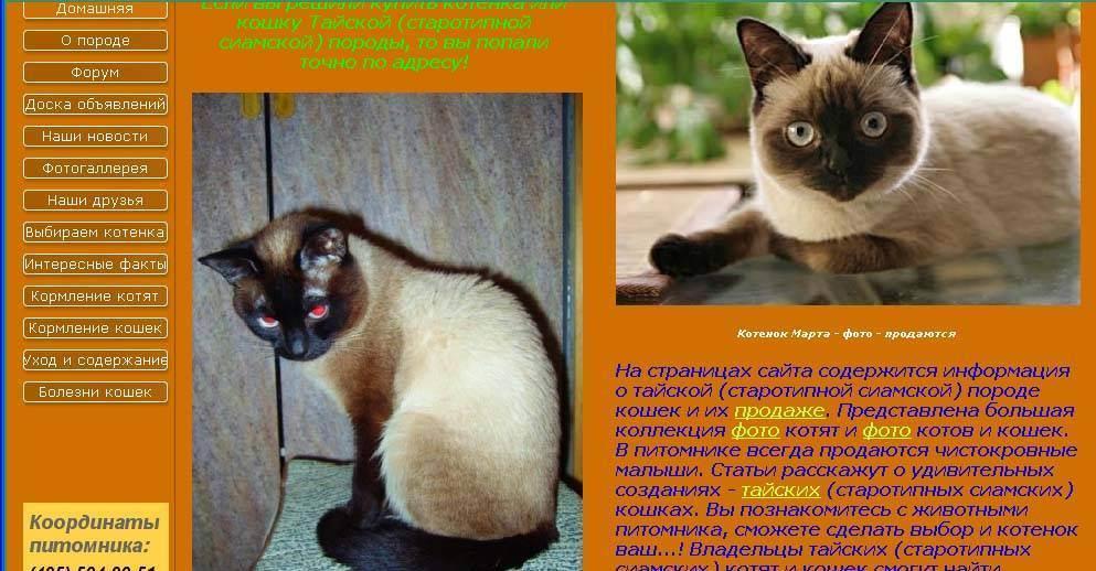 Кошка — официальная minecraft wiki