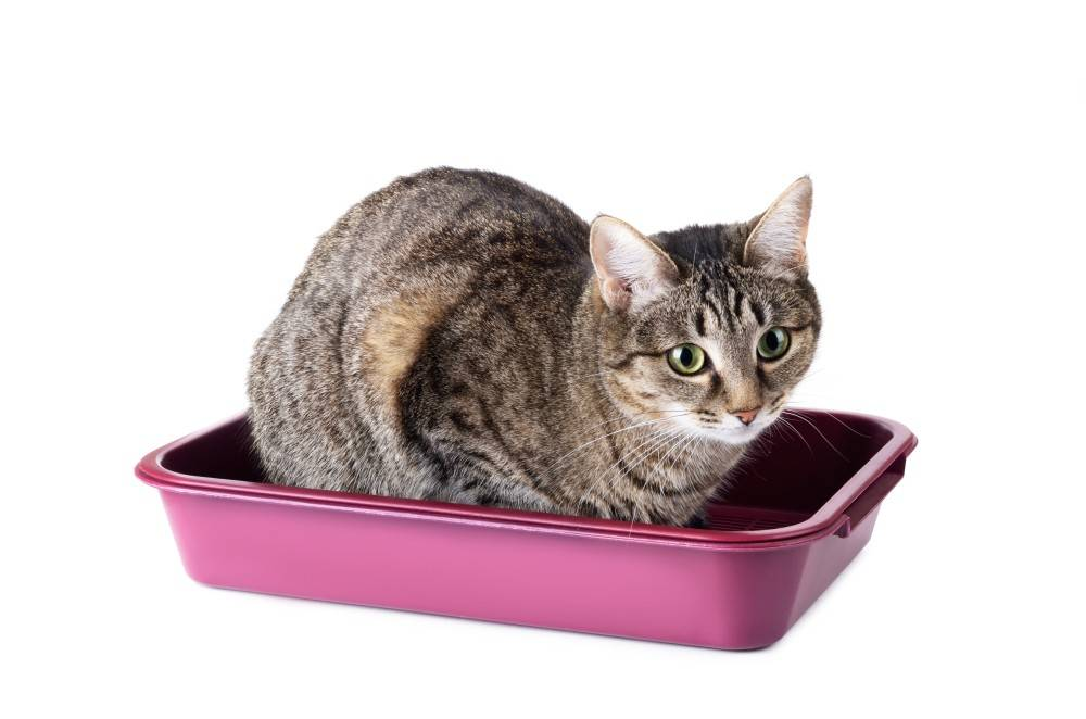 Как отучить котенка гадить где попало