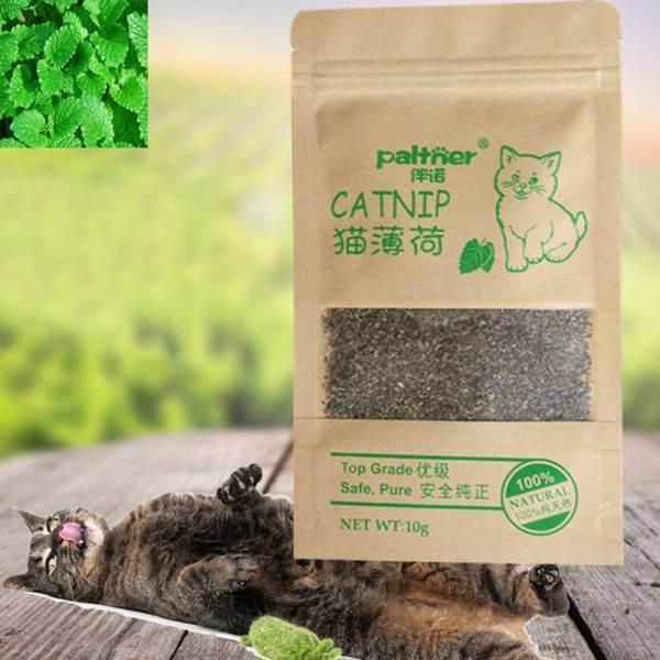 Кошачья мята — лечебные свойства для кошек и людей