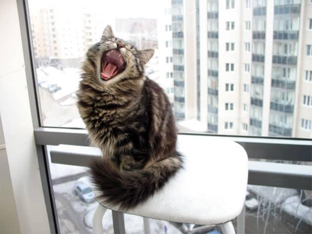 Почему кошка орёт без причины по ночам: что делать, кошка будит по ночам и не даёт спать