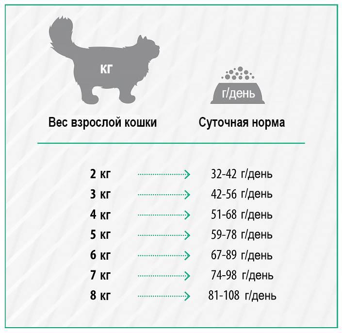 Средний вес кошки - сколько должна весить взрослая кошка
