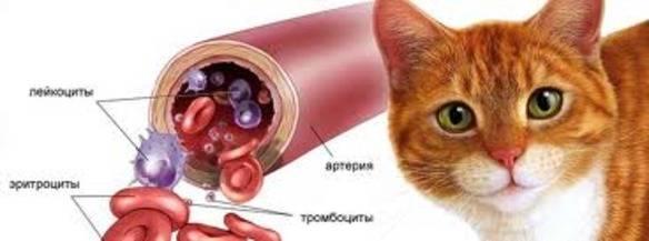 Как умирает кошка от анемии