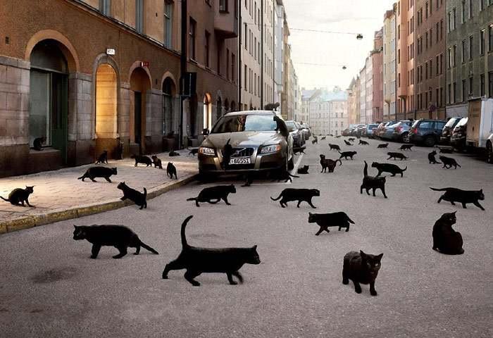 Энергетика кошки в доме: что приносят питомцы в жизнь своих хозяев?