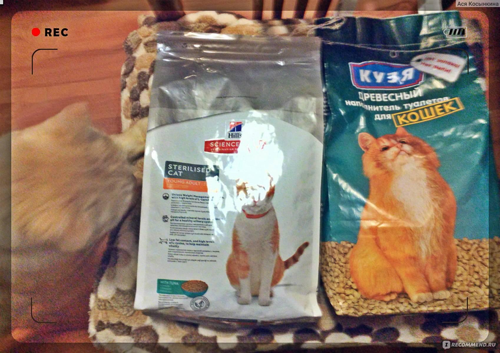 Какой корм для котенка самый лучший