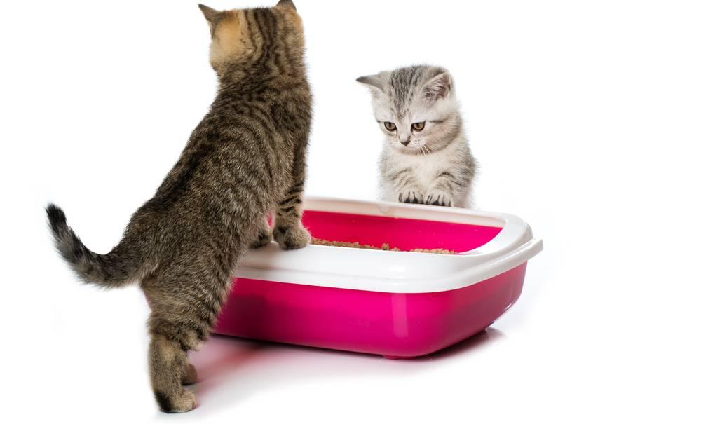 Кот часто ходит в туалет по-маленькому по чуть-чуть