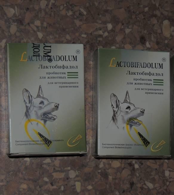Как применять лактобифадол для кошек