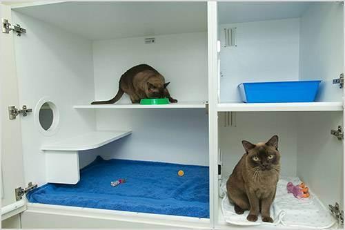 Как выбрать гостиницу для кошки, зоогостиница по передержке кошек