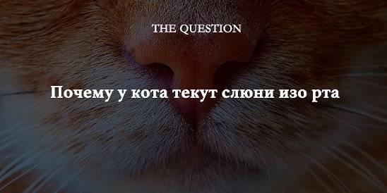 Почему у кошки текут слюни изо рта прозрачные как вода: как лечить и что делать?