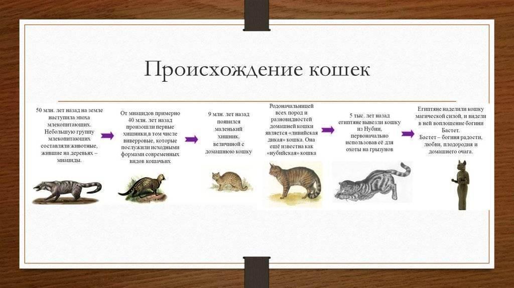 История происхождения кошек, их появление на земле: неизвестные и интересные факты