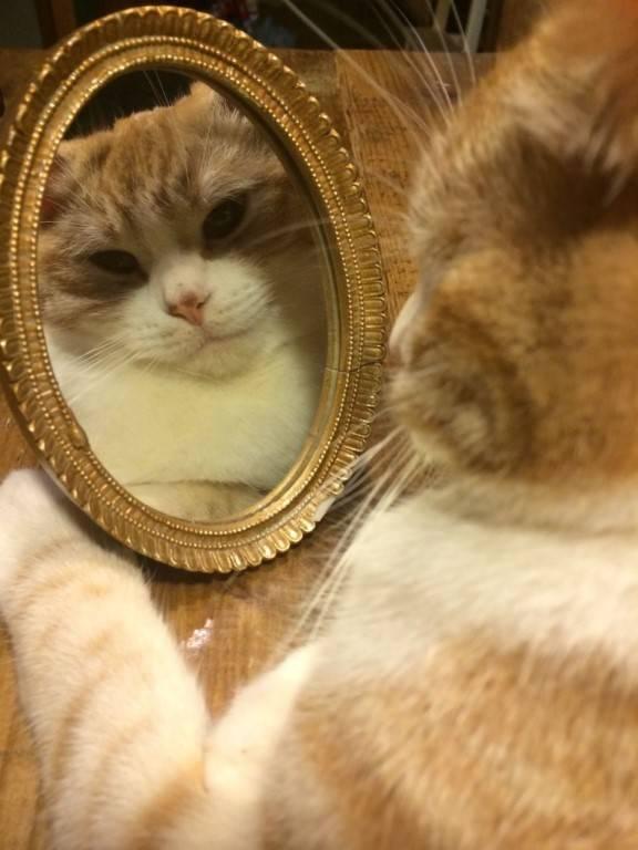 Кошка и зеркало - что видят кошки в зеркале! | caticat.ru