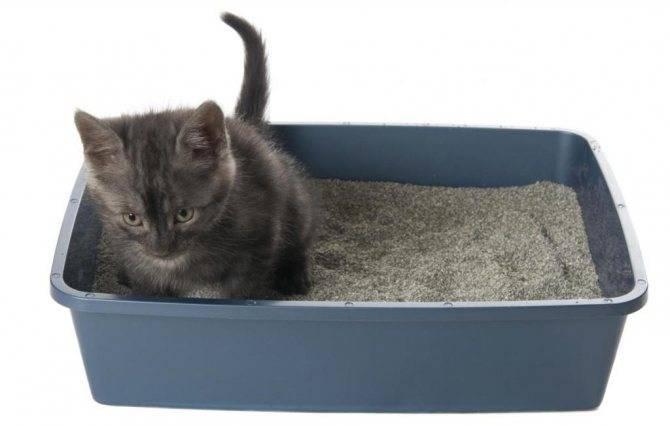 Как приучить месячного котенка к лотку