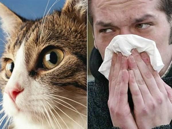 Аллергия у кошек: как распознать недуг и избавиться от него