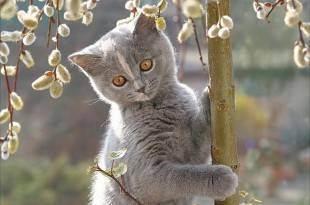 Кошачий лишай — причины появления, лечение и профилактика