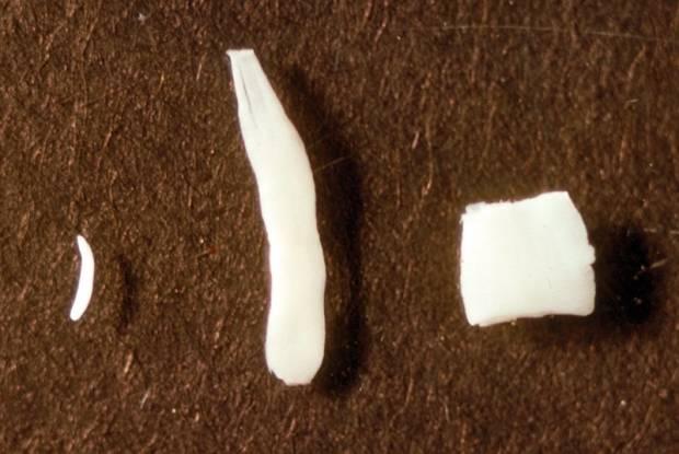 Что делать если в кале у кота появились белые глисты