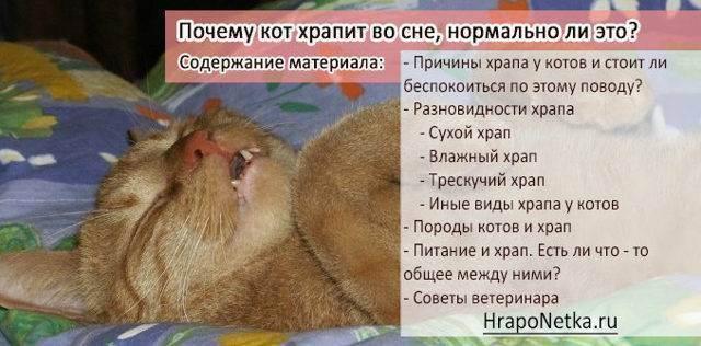Кошка когда дышит свистит носом. ваша кошка храпит? первые признаки заболеваний