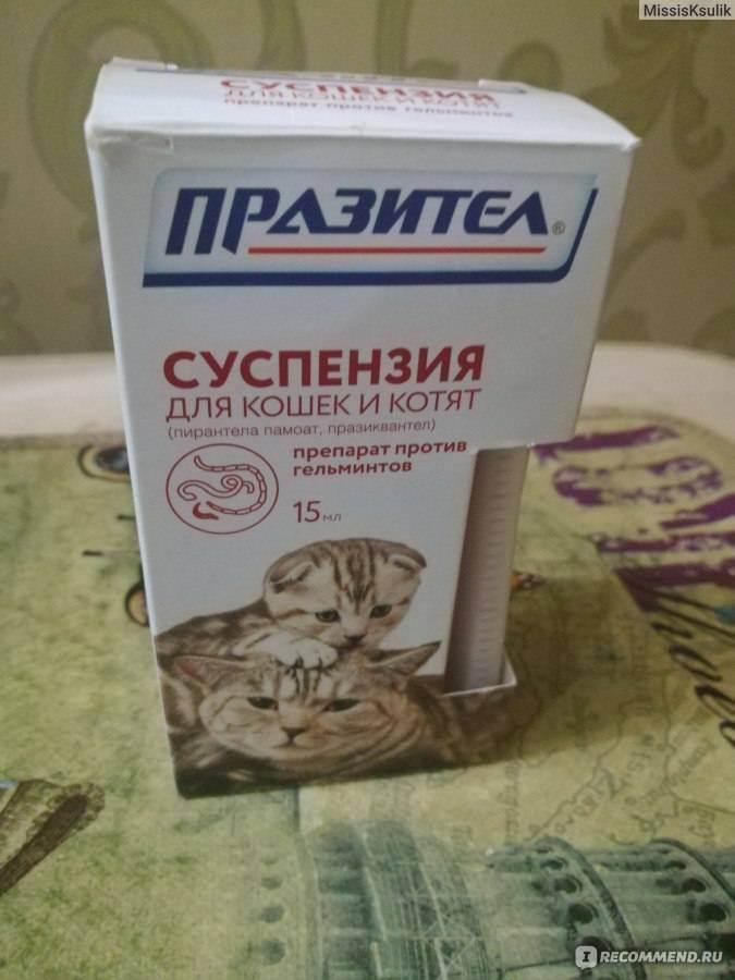 Глисты у кошек - симптомы и лечение