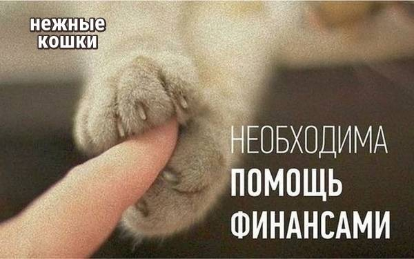 Слишком ласковый кот)))/ добавила фото