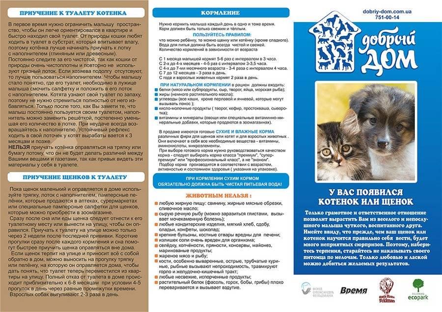 Кошка с улицы: лечим нового питомца