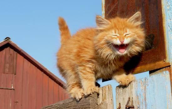 Кот чихает: причины и лечение