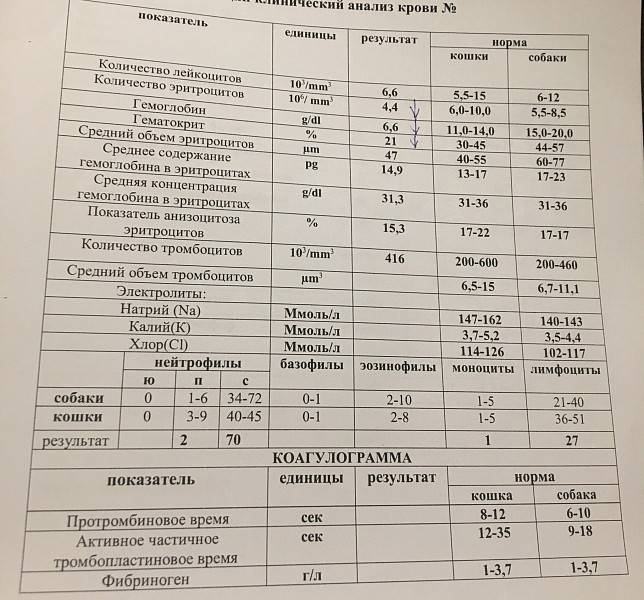 Общий анализ крови кошки расшифровка норма