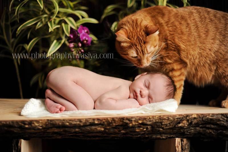 Кошки и маленькие дети: ответы на вопросы (faq)