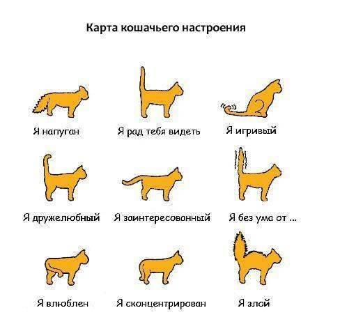 Как понять, что кошка совсем скоро родит или уже рожает: признаки начала и процесс родов