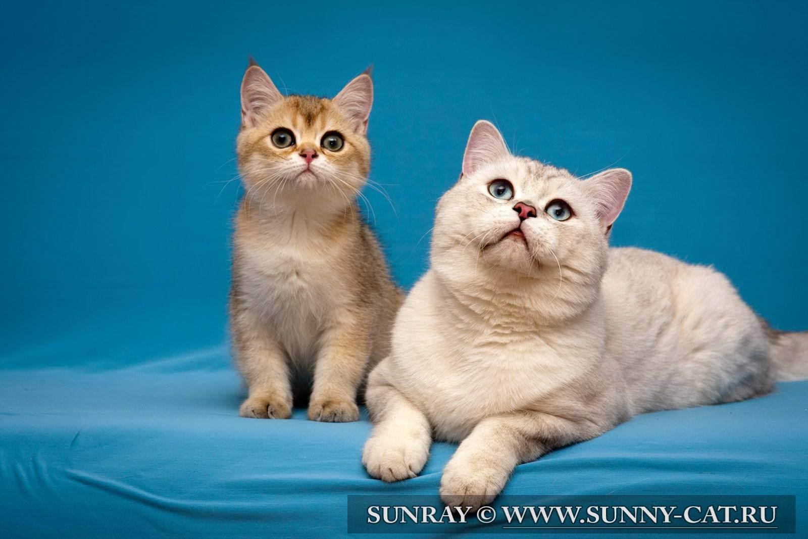 Cтиот ли брать взрослую кошку?