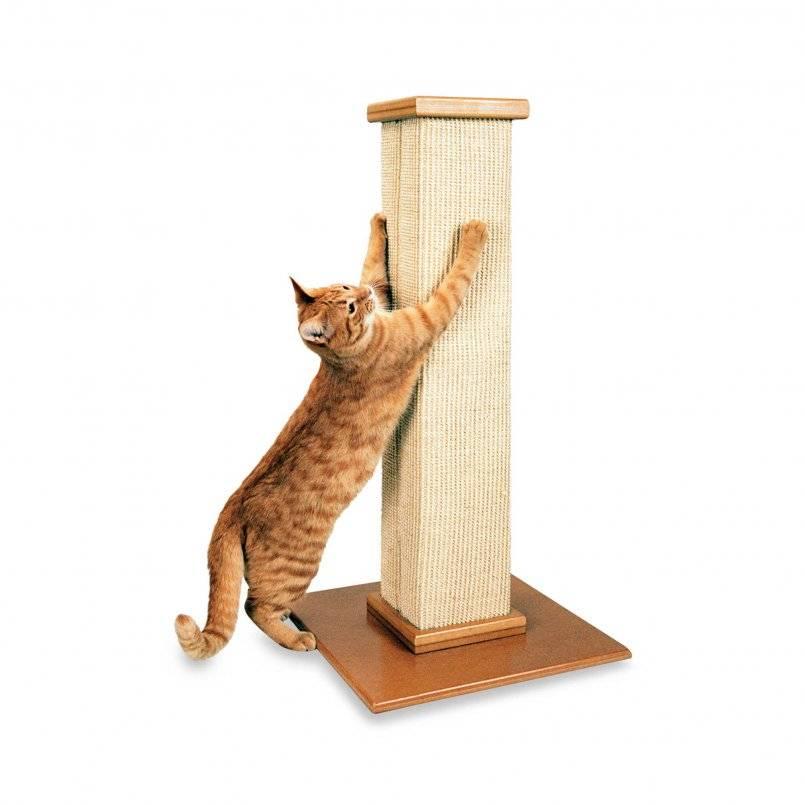 Как приучить кошку к когтеточке | все о кошках