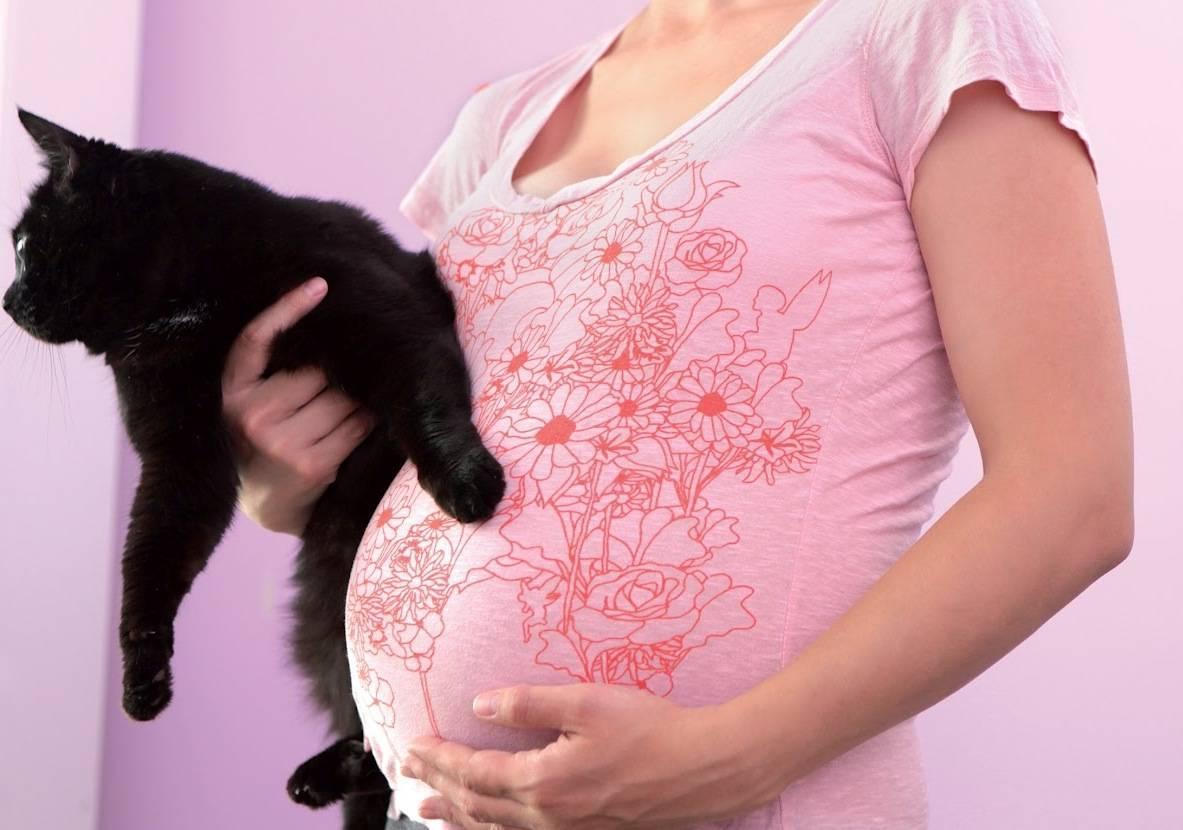 Как определить у кошки замершую беременность на