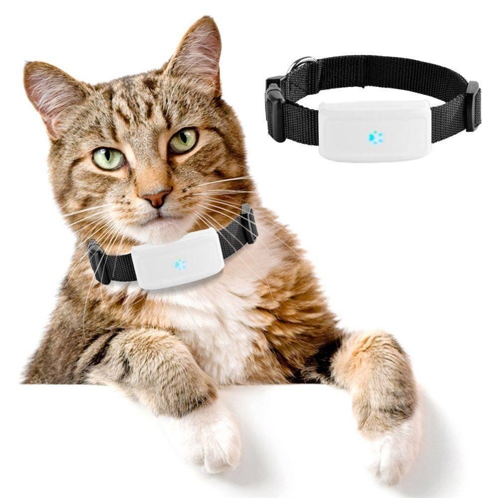 Подробный обзор gps ошейников для котов с трекером (датчиком слежения)