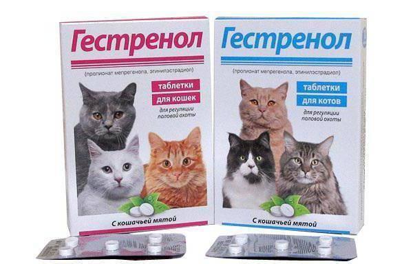 Укол для кошки, чтобы она не гуляла: инъекции гормональных препаратов от течки
