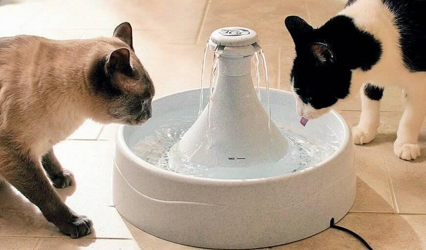 Почему кошка не пьет воду, причины и решения проблемы, видео инструкция