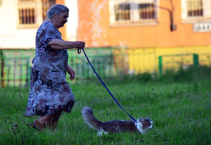 Ветеринарный врач про течку у кошек: как успокоить