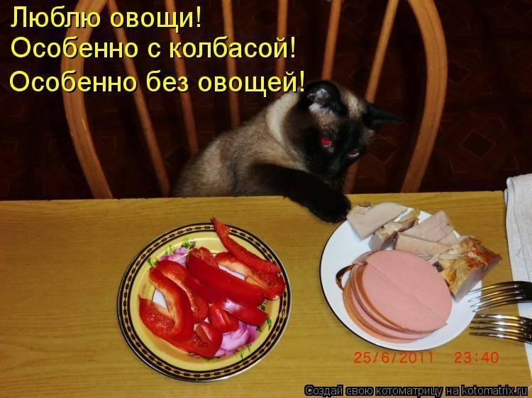 Как принудительно кормить кошку во время болезни
